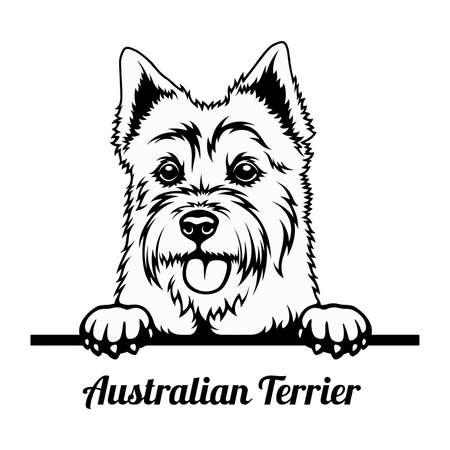 Peeking Dog - Australian Terrier breed - head isolated on white