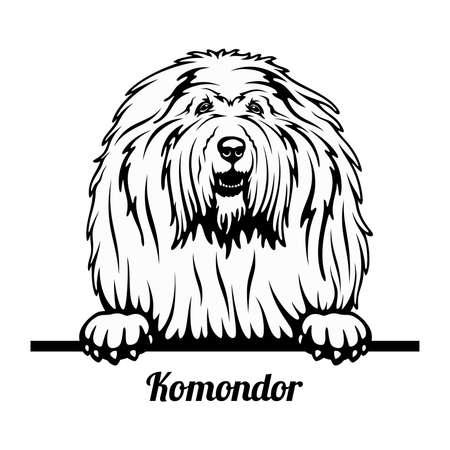 Peeking Dog - Komondor breed - head isolated on white