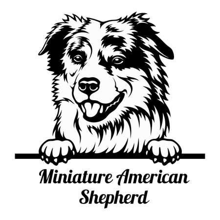Peeking Dog - Miniature American Shepherd breed - head isolated on white 矢量图像