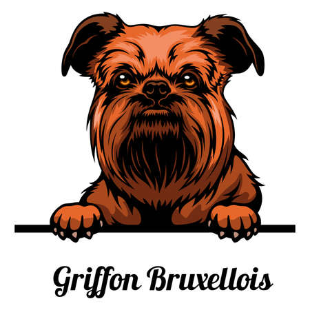 Head Griffon Bruxellois - dog breed. Color image of a dogs head isolated on a white background 矢量图像