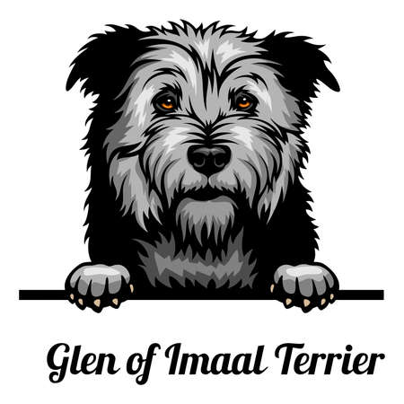 Head Glen of Imaal Terrier - dog breed. Color image of a dogs head isolated on a white background 矢量图像