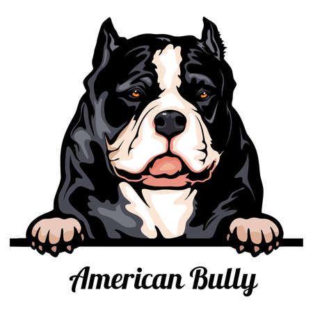 Head American Bully - dog breed. Color image of a dogs head isolated on a white background 矢量图像