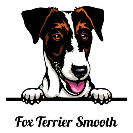 Head Fox Terrier Smooth - dog breed. Color image of a dogs head isolated on a white background