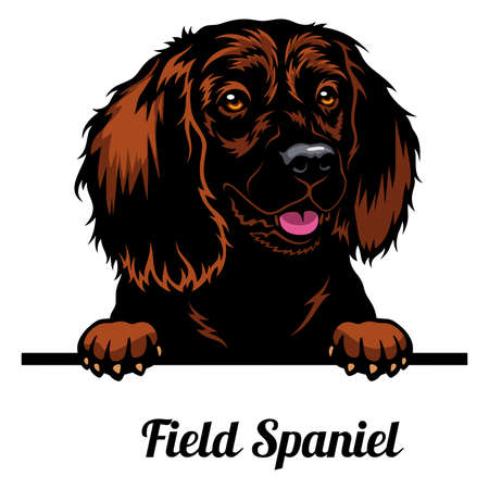 Head Field Spaniel - dog breed. Color image of a dogs head isolated on a white background 矢量图像