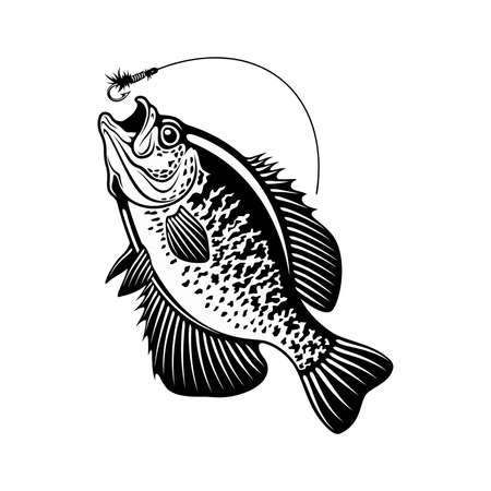 White Crappie fish - black and white vector illustration