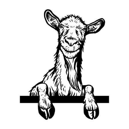 Cheeky Goat peeking out - face head isolated on white - vector stock