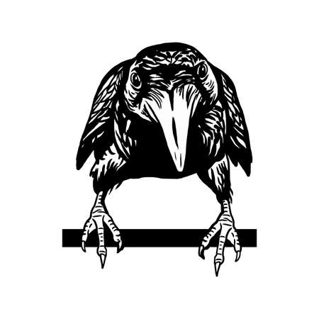 Cheeky crow isolated on white background. Raven Halloween character. Hand drawn sketch style vector