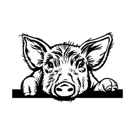 Peeking Pig head. Hand drawn sketch steak meat products with sausages and salami, pig farm fresh food, black and white vintage illustration