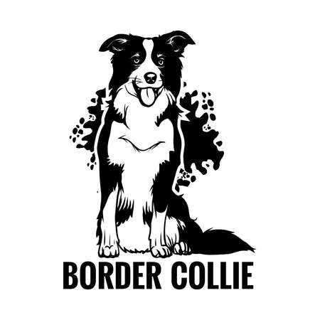 Border collie sitting with his tongue out. Element of design.