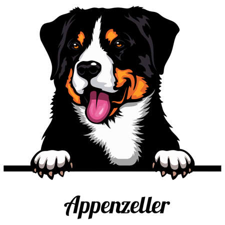 Appenzeller - dog breed. Color image of a dogs head isolated on a white background
