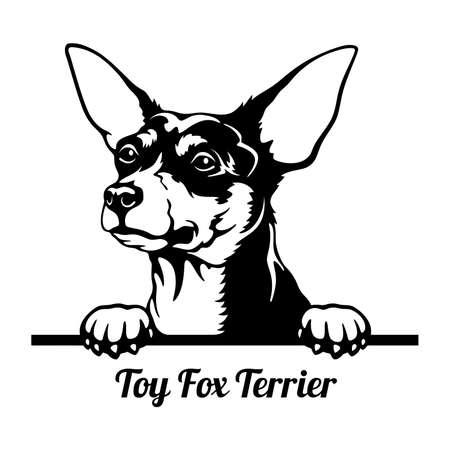 Toy Fox Terrier Peeking Dog - head isolated on white