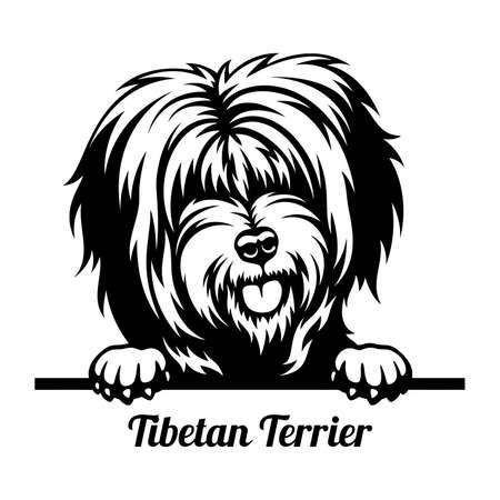 Tibetan Terrier Peeking Dog - head isolated on white