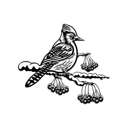 Blue Jay bird - Winter Bird, Wildlife Stencils for Christmas Bird Decor, winter decor, Clipart Vector