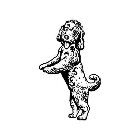 Labradoodle Mix dog - vector isolated illustration on white background
