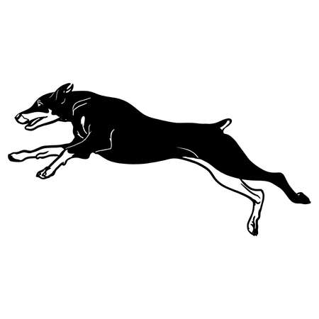 Doberman Pinscher dog - vector isolated illustration on white background