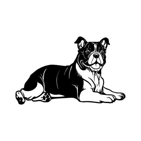English Bulldog dog - vector isolated illustration on white background 向量圖像