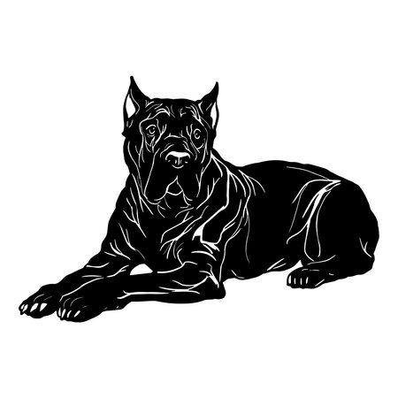 Cane Corso dog - Lying Cane Corso, Dog Breed, Pet vector stock isolated illustration on white background. Happy Cane Corso Pet 向量圖像