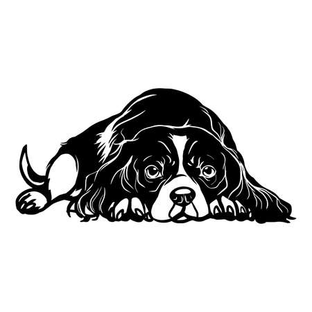 Cavalier King Charles Spaniel dog - Lying Cavalier King Charles Spaniel vector stock isolated illustration on white background.