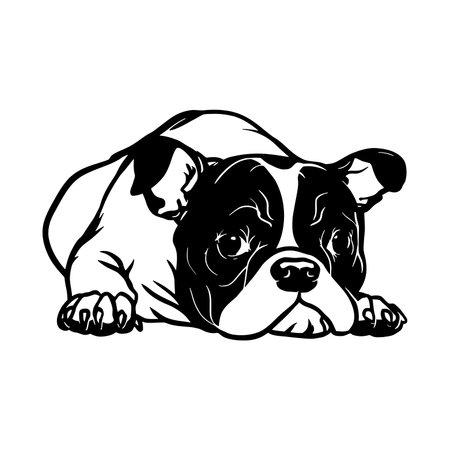 French Bulldog dog - Lying dog vector stock isolated illustration on white background.