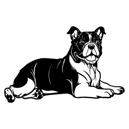 English Bulldog dog - Lying dog vector stock isolated illustration on white background.