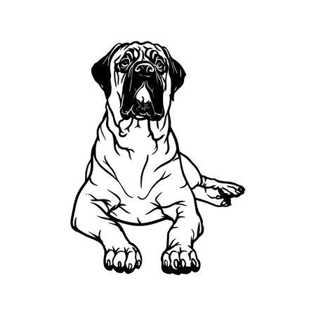 Bullmastiff dog - Lying dog vector stock isolated illustration on white background.