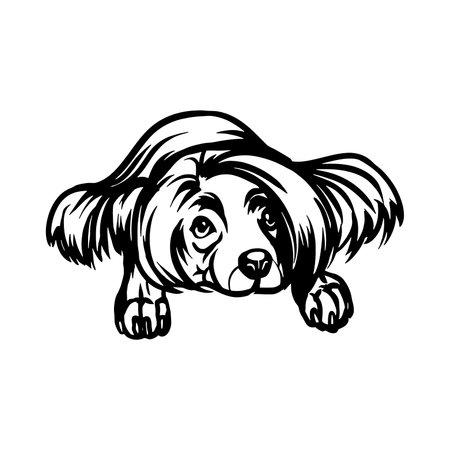 Chinese Crested dog - Lying dog vector stock isolated illustration on white background. 向量圖像