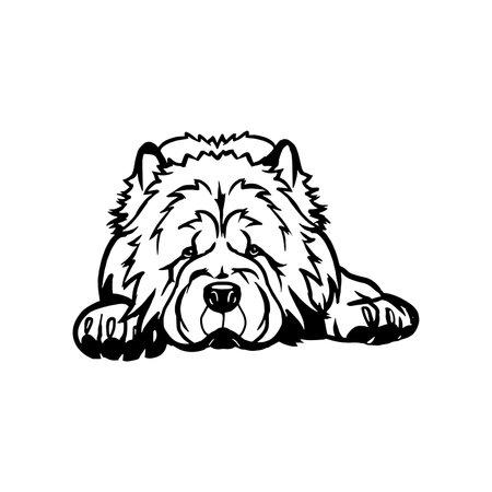 Chow Chow dog - Lying dog vector stock isolated illustration on white background. 向量圖像