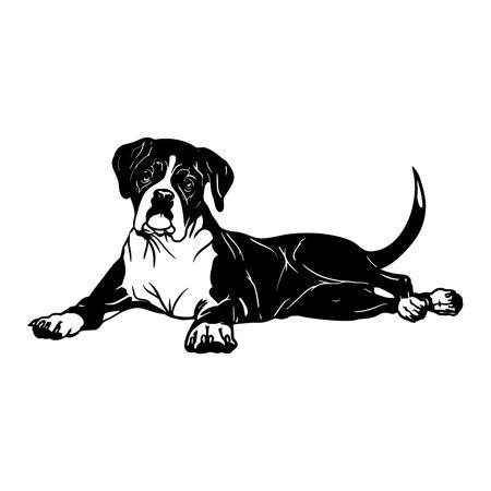 Boxer dog - Lying dog vector stock isolated illustration on white background.
