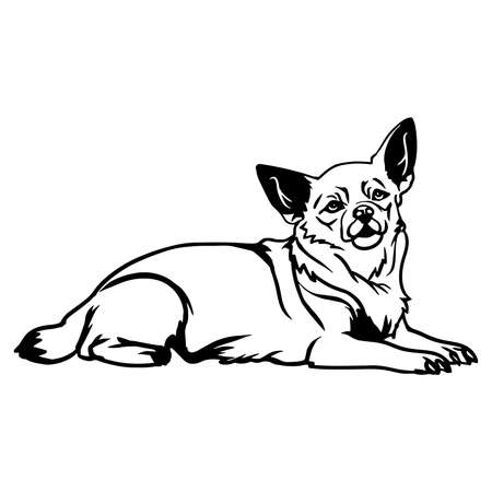Chihuahua dog - Lying Chihuahua vector stock isolated illustration on white background.