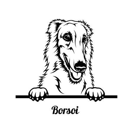 Peeking Dog - Borzoi breed - head isolated on white