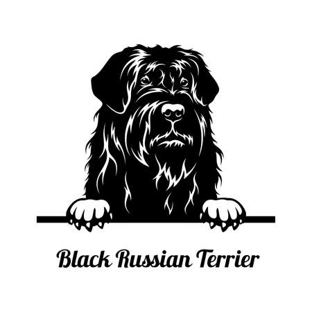 Peeking Dog - Black Russian Terrier breed - head isolated on white