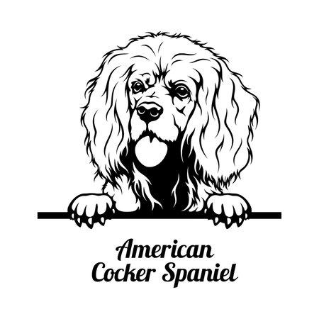 Peeking Dog - American Cocker Spaniel breed - head isolated on white
