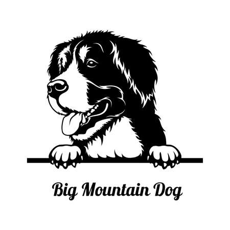 Peeking Dog - Big Mountain Dog breed - head isolated on white