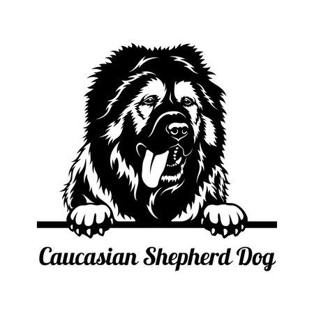 Peeking Dog - Caucasian Shepherd Dog breed - head isolated on white