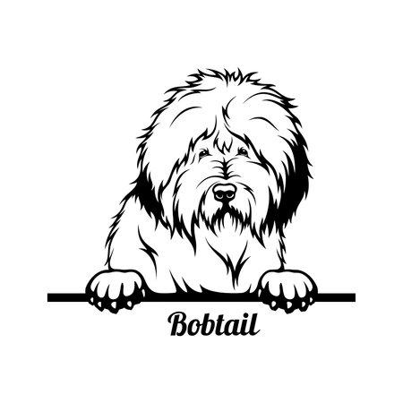 Peeking Dog - Bobtail breed - head isolated on white