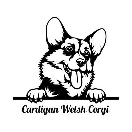 Cardigan Welsh Corgi Peeking Dog head isolated on white