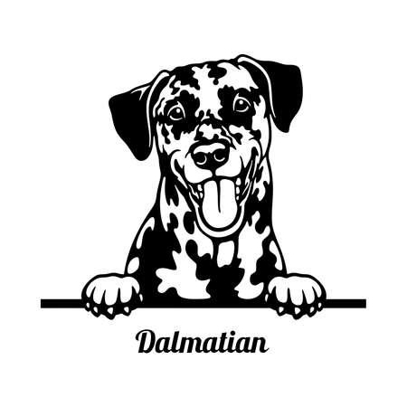 Dalmatian Peeking Dog head isolated on white Ilustración de vector