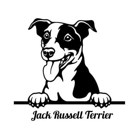 Jack Russell Terrier Peeking Dog head isolated on white