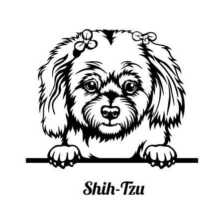 Shih-Tzu Peeking Dog head isolated on white
