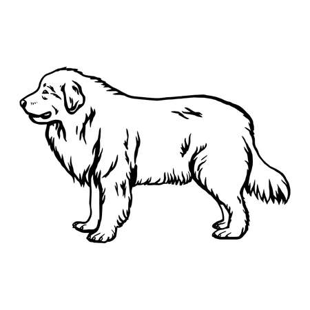Great Pyrenees dog - vector isolated illustration on white background