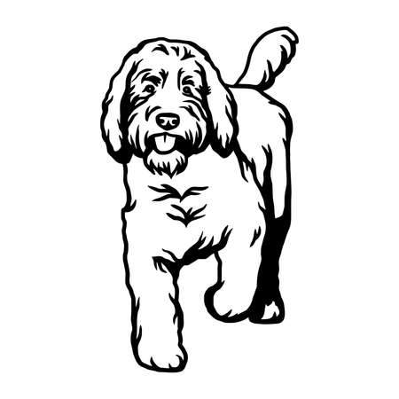 Goldendoodle dog - vector isolated illustration on white background