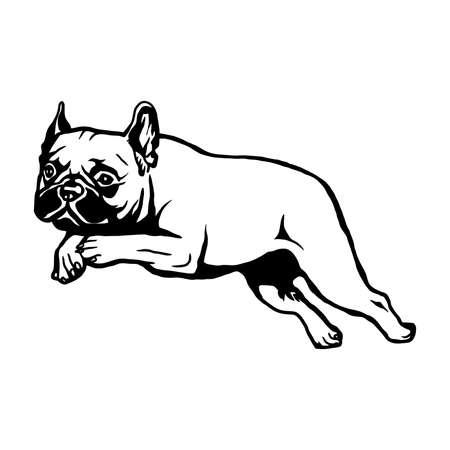 French Bulldog dog - vector isolated illustration on white background