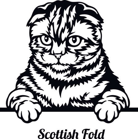 Scottish Fold Cat - Cat breed. Cat breed head isolated on a white background Ilustración de vector