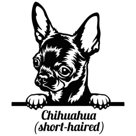 Chihuahua Peeking Dog - head isolated on white