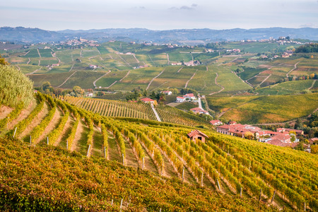 cuneo province: Langhe and Roero vineyards autumn landscape, Barolo, Dolcetto, Barcaresco wine. Cuneo province, Piedmont, Italy.