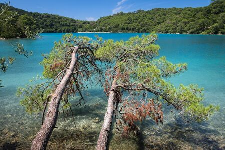 Mljet National Park, Mljet island, Dalmatia, Croatia. Maritime pines in the small lake, travel destination, outdoor excursion in a natural paradise.
