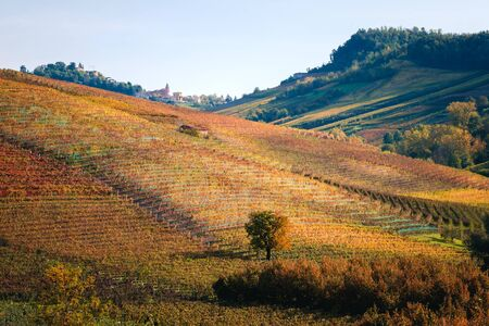 Langhe vineyards hills landscape in autumn with beautiful orange and yellow colors. Viticulture of Dolcetto, Nebbiolo and Barbera red wine. Tourism in Europe, travel destination. Piedmont, Italy landmark.