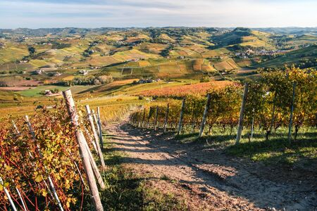 Langhe vineyards hill, view to the hilly landscape with beautiful orange and yellow colors in autumn. Viticulture of Dolcetto, Nebbiolo, Barbera, Barolo red wine. Tourism in Europe, travel destination. Piedmont, Italy.