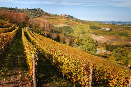 Langhe vineyard in autumn with beautiful orange and yellow colors. La Morra village in background. Viticulture of Dolcetto, Nebbiolo and Barbera red wine. Tourism in Europe, travel destination. Piedmont, Italy landmark.