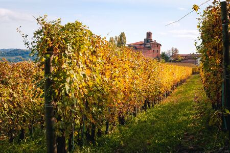 Langhe vineyard in autumn with beautiful orange and yellow colors. Viticulture of Dolcetto, Nebbiolo, Barbaresco and Barbera red wine. Tourism in Europe, travel destination. Piedmont, Italy landmark.